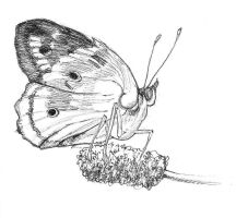Sketch a Day 4: Insect Study by yarnmon