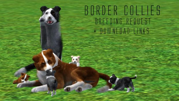 Border Collies Breeding Request (cover) by mist07000