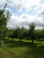 Orchard 02 by gsdark-stock