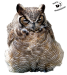 Cut-out stock PNG 01 - fluffy owl by Momotte2stocks