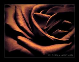 the Bronze Rose by inktice
