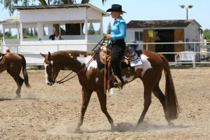 Chestnut Overo Paint Western Pleasure Gelding by HorseStockPhotos