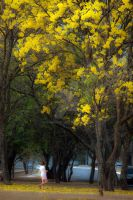 The Girl the yellow and the tree by EyeInFocus
