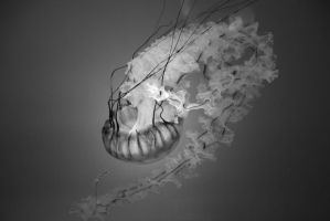 Fire of The Jelly Fish by darthbriboy