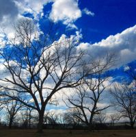 I love trees 3 by LovelyBPhotography