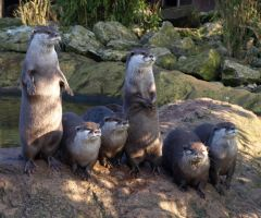 The Otter Family Portrait by gee231205