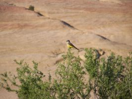 Yellow Bird by theNanna