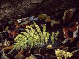 Lonely Fern by CleverSleazoidXD