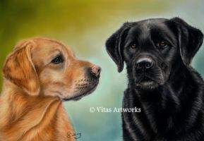 two labs by Vitadog