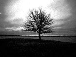 lone tree by SPINNING-AROUND