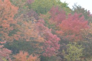 2014 Natural Autumn Color 16 by Miss-Tbones