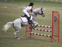 STOCK Showjumping 456 by aussiegal7