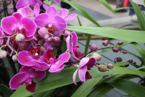 Orchids by thesmellofroses