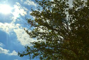 Branches in the sun by ChrisMaster327