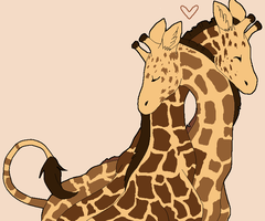 giraffes by Curticle