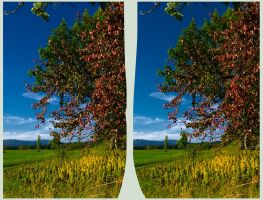 Gossamer :: HDR Cross Eye 3D :: by zour