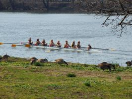 Rowing and Grazing by Everlasting90