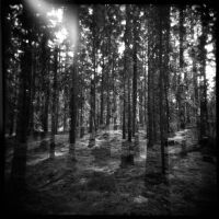The Memories of Trees by PoLazarus2