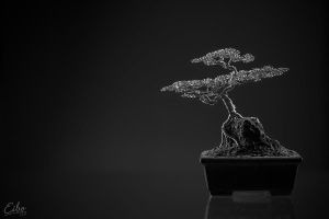 Bonsai 1 by Eibo-Jeddah