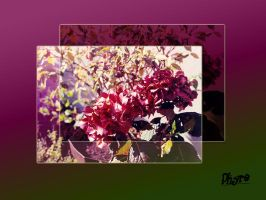 Hydrangea Wallpaper by BlindedVisions