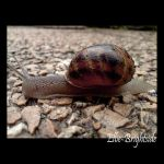 Escargot by Ellie-Brightside