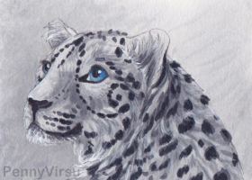 Snow Leopard by Penny-Dragon