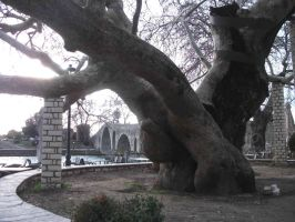 the plane tree and the old stone bridge of Arta by ritsasavvidou