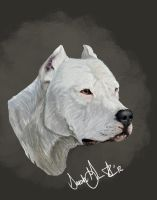 Dogo Argentino by airhead77