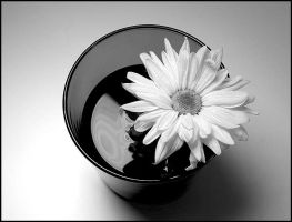 flower in a glass by Tlemetry