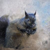 Black Squirrel by lakeglenmiss