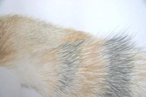 fur texture - detail by Ajdica