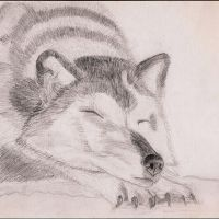 Loup by tite-pao