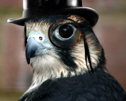 Bird in a Tophat by Gil212