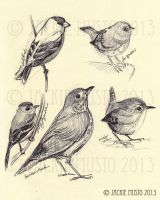 Sketches - Birds by Jackie-M-Illustrator