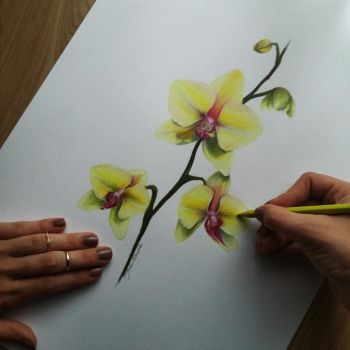 Orchids by Joan95