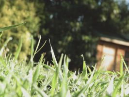 Untitled by EvePatrica
