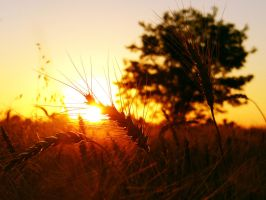 A Summer Day by CastleBurh