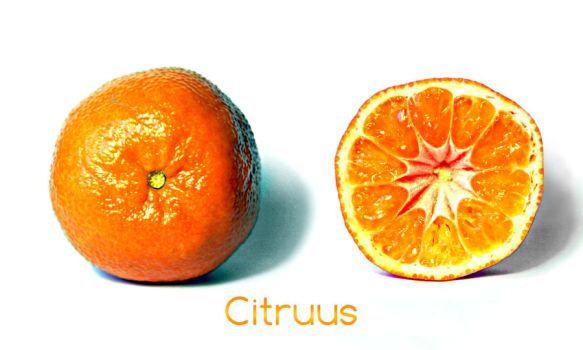 Citruus by aajohan