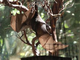 Rodrigues Fruit Bat by photographyflower