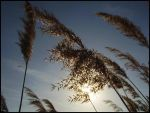 wind by dependon