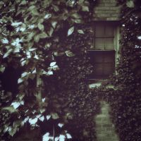 Crept With Leaves by Xandriia1