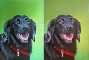 Tarkan - acrylic, dog by corienb