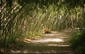 bamboo park by Lilia73