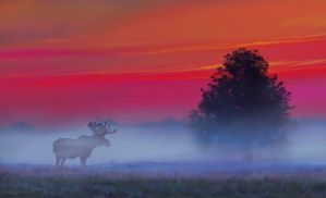 moose painting by nosoart