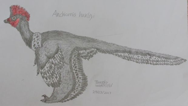 Anchiornis huxleyi by Tim64