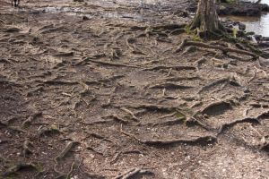 Roots by Sheiabah-Stock