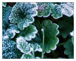 First frost by sherln