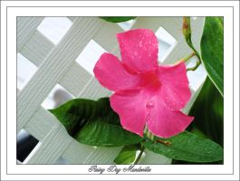 Rainy Day Mandevilla by TThealer56
