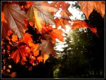 Autumn Leaves in May by Simple-but-vibrant