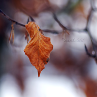 The Lonely Leaf. by OliviaMichalski